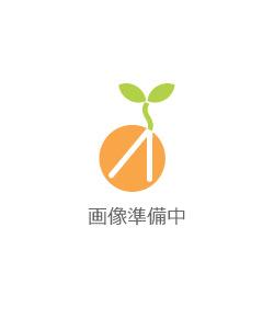 私服勤務OK★一般事務募集!!