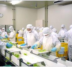 食品製造工場内での作業スタッフ募集♪
